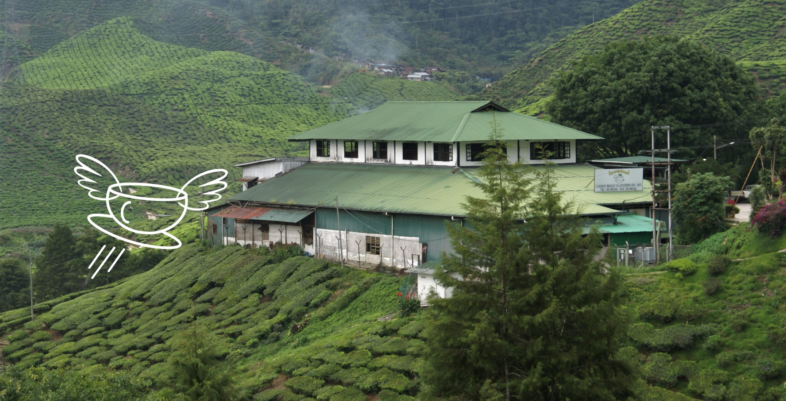 Fabrique de thé en Malaisie